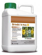 Brindis BMoly 5 L