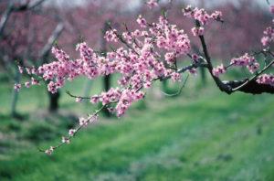 flors_34951095