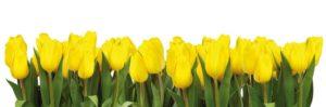 flors_grogues